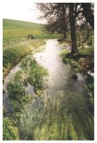 A beautiful stream in Avebury, 2000.  This picture does not come close to doing it justice